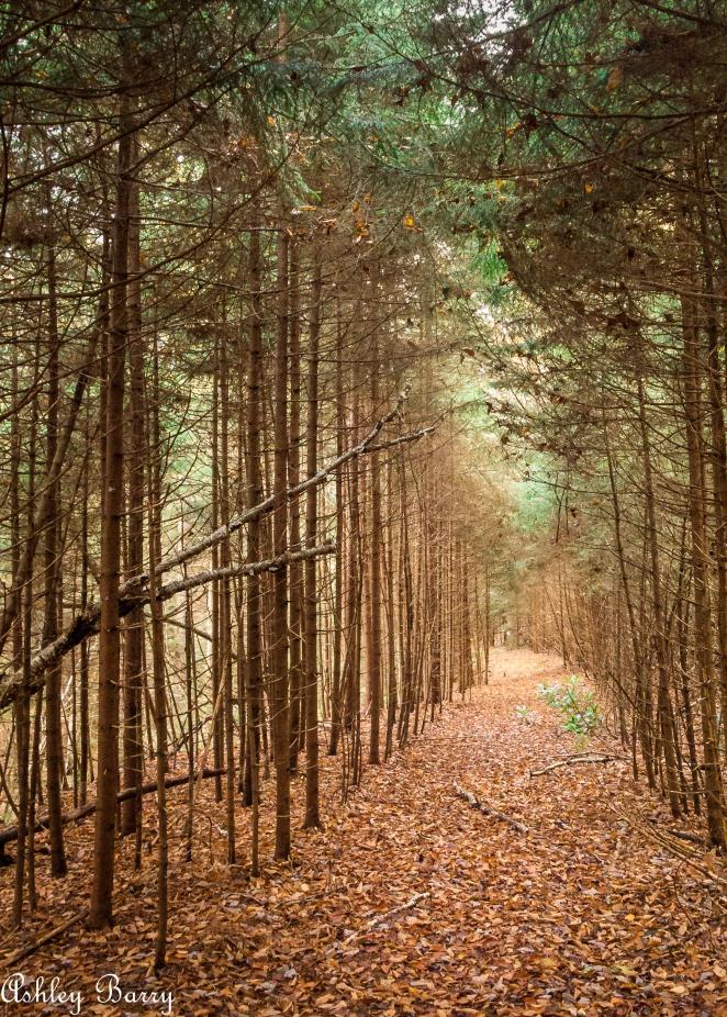 Cranberry_Wilderness-10