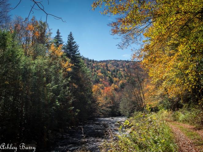 Cranberry_Wilderness-14
