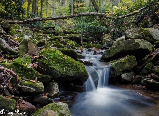 Cranberry_Wilderness-17