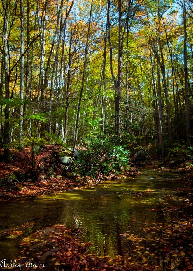 Cranberry_Wilderness-20