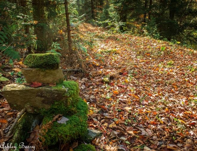 Cranberry_Wilderness-8