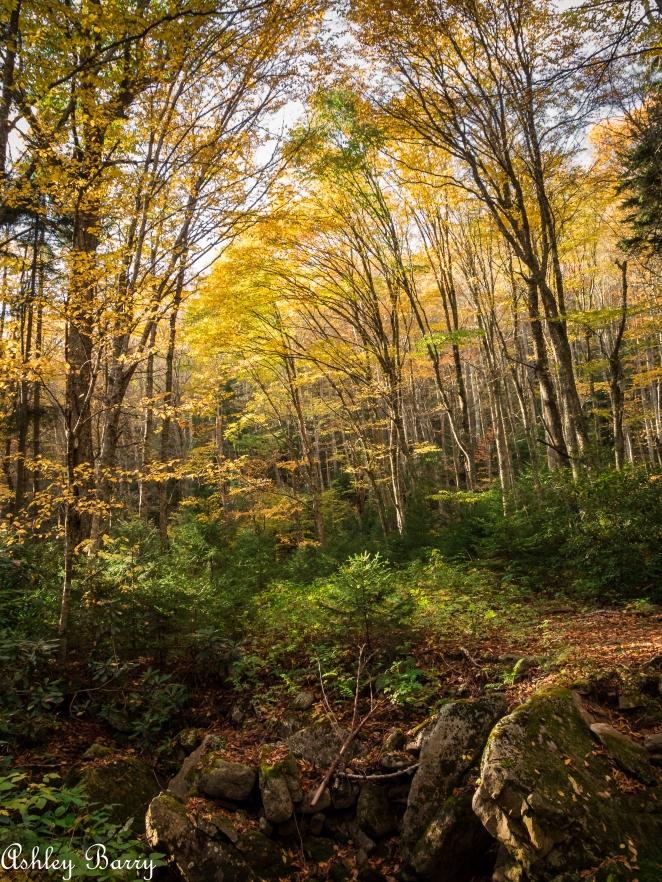 Cranberry_Wilderness-9